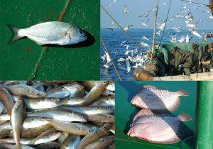balık kefken