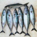 Kefken'de balık avı turu yapmak ister misiniz?